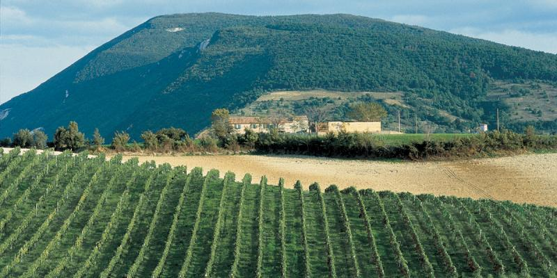 Domaine de Montecarotto